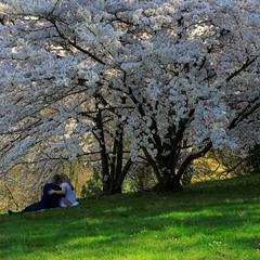 Любовь и весна.