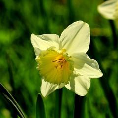 Ты долго будешь сниться, прелестная весна!