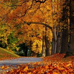 Вдруг вспомнилась осень..
