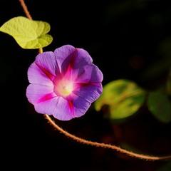 Звёздный цветок.