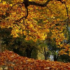 Смотрела осень в отражение