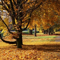 Осень в золотом