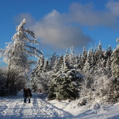 Селфи в зимнем лесу.