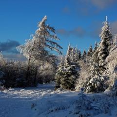 Заснеженный лес.