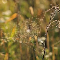 Павутинка, прикрашена ранішньою росою