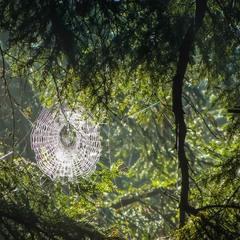Сонячне павутиння