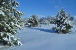 Коли зими були сніжними