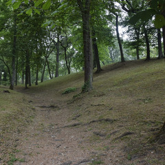 Лісовий етюд
