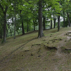 Майже Булонський ліс