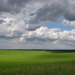 Смарагдове поле