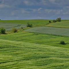 Бархатистий зелений килим ніжно вкрив всі пагорби навкруг