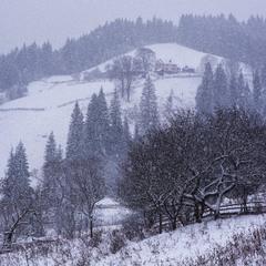 Снежное утро в Ворохте