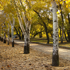 В осінньому парку
