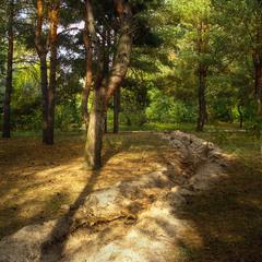 Орільський ліс - 3