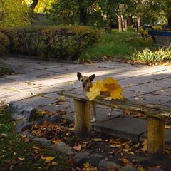 Про осінь в місті і песика в листі :-)