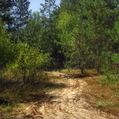 Орільський ліс - 2