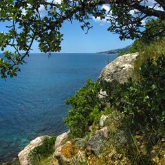 Вид на Форос з дикою грушею і купальницею :-) Спогади про Крим-18.