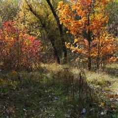 В осіньому лісі