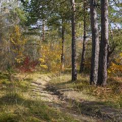 В осінньому лісі