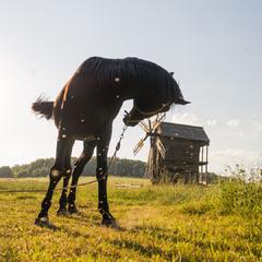 Лошадь вечерняя