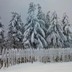 Заметает зима , заметает ...