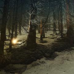 Загублене в холодному лісі ...
