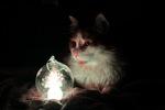мой кот Фокс