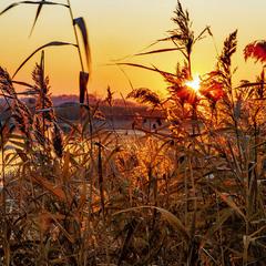 Золото світанку