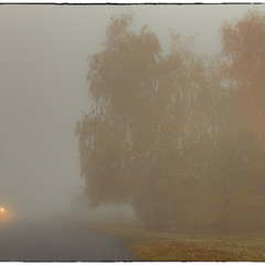 Осінній ранок виплива з туману...