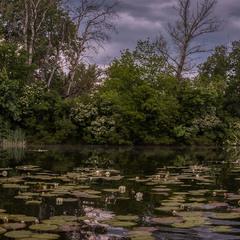 Есть в графском парке черный пруд...