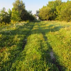 Ранкова прогулянка