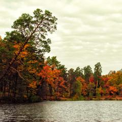 Осінь у Пущі-Водиці