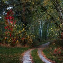 Дорога в осінню казку