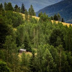 У затишку карпатських лісів