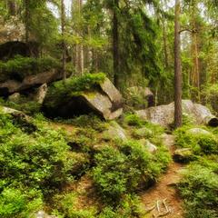 Магія карпатських лісів
