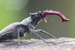 Цар жуків:)