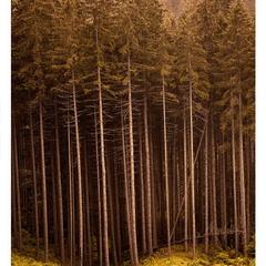 Зачарований ліс...