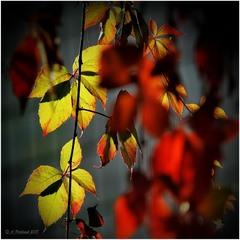 Фарби осені...