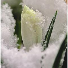 Весна...22-й день березня...