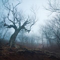 В сумрачном лесу