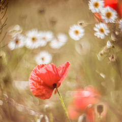Я сошью себе платье из ярких цветов И сплету из ромашек венок...