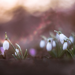 Весна приходит шёпотом...