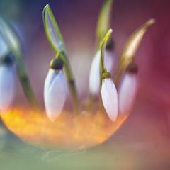 Ярким, чудесным светом гнездышко вьет весна...