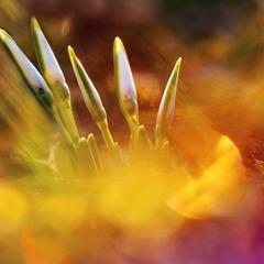 Неизбежность весны предначертана свыше ...