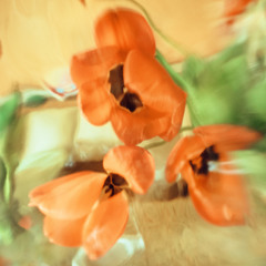 Цветочных красок акварель...