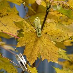 Лайфхак - как продлить красивую осень.