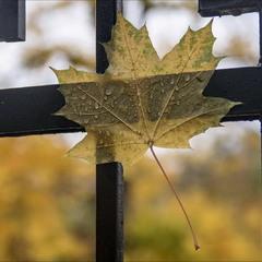 Осенние прилипалы.