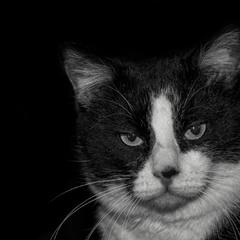 Кот с которым подружиться не получилось.