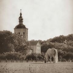 Монастирська конячка