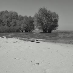 Какая-то коряга и деревья, растущие из воды.